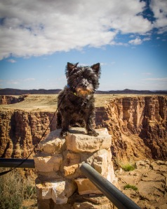 Ozzie at the Grand Canyon